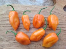 Verse Habanero Orange, 50gr (+/- 8 pepers)