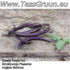 Royalty Purple Pod Struikboontje Heirloom 10 zaden TessGruun