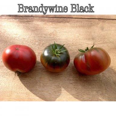 Tomato Brandywine Black 10 Seeds Tessgruun Tessgruun Six (!) different race series in one state: tessgruun